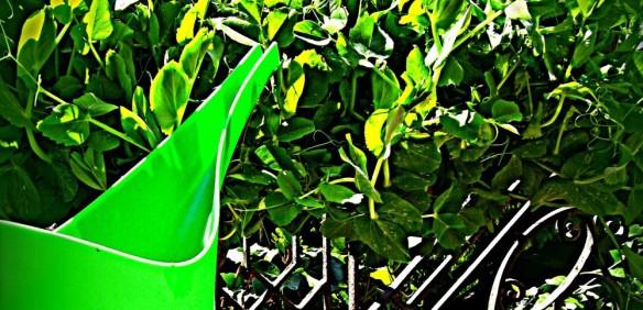 cropped-cropped-tavaszc3b6rc3b6m.jpg