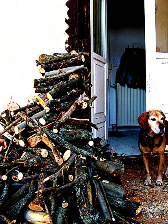 kutya, farakás