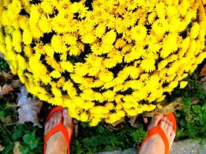 krizantém papuccsal